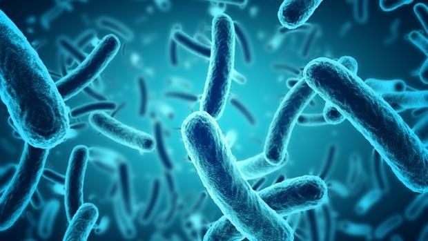 Biocidas efectivos contra bacterias